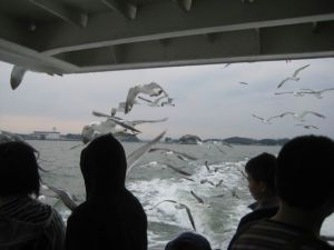 Seagulls attacking the boat