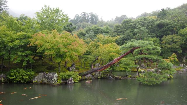 Zen pond at Tenryu-ji