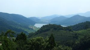 Somewhat dilapidated tea hills